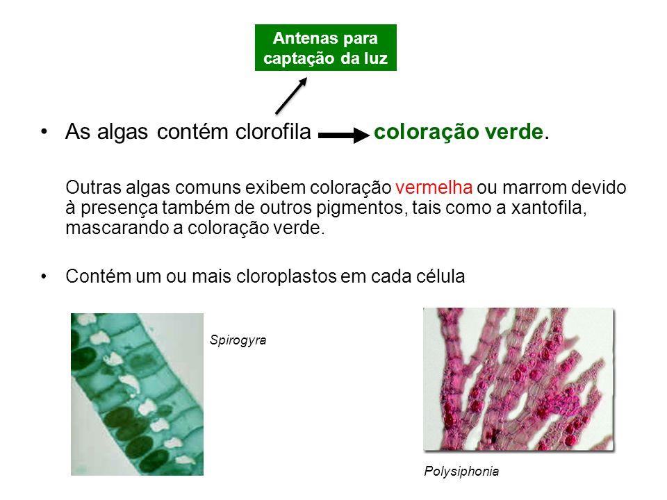 As algas contém clorofila coloração verde. Outras algas comuns exibem coloração vermelha ou marrom devido à presença também de outros pigmentos, tais