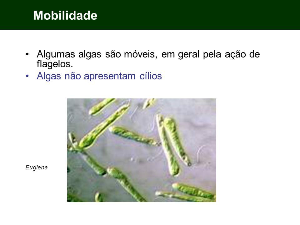 Mobilidade Algumas algas são móveis, em geral pela ação de flagelos. Algas não apresentam cílios Euglena