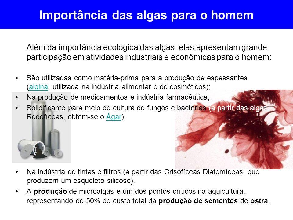 Importância das algas para o homem Além da importância ecológica das algas, elas apresentam grande participação em atividades industriais e econômicas
