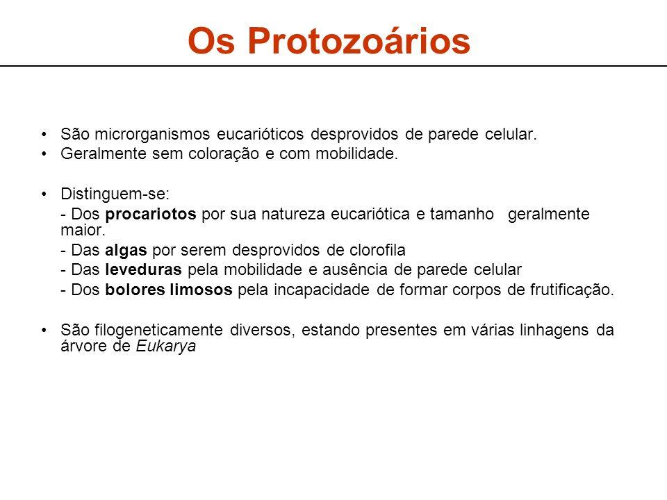 Os Protozoários São microrganismos eucarióticos desprovidos de parede celular. Geralmente sem coloração e com mobilidade. Distinguem-se: - Dos procari
