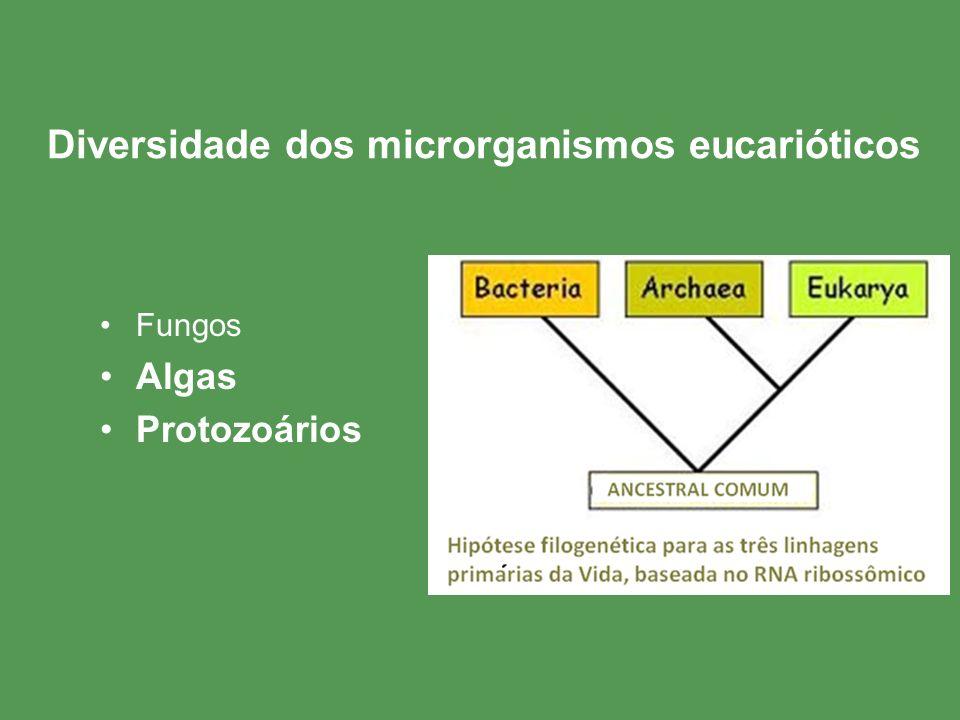 Diversidade dos microrganismos eucarióticos Fungos Algas Protozoários