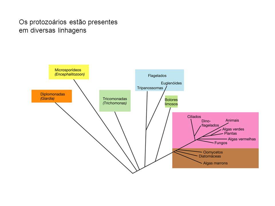 Os protozoários estão presentes em diversas linhagens
