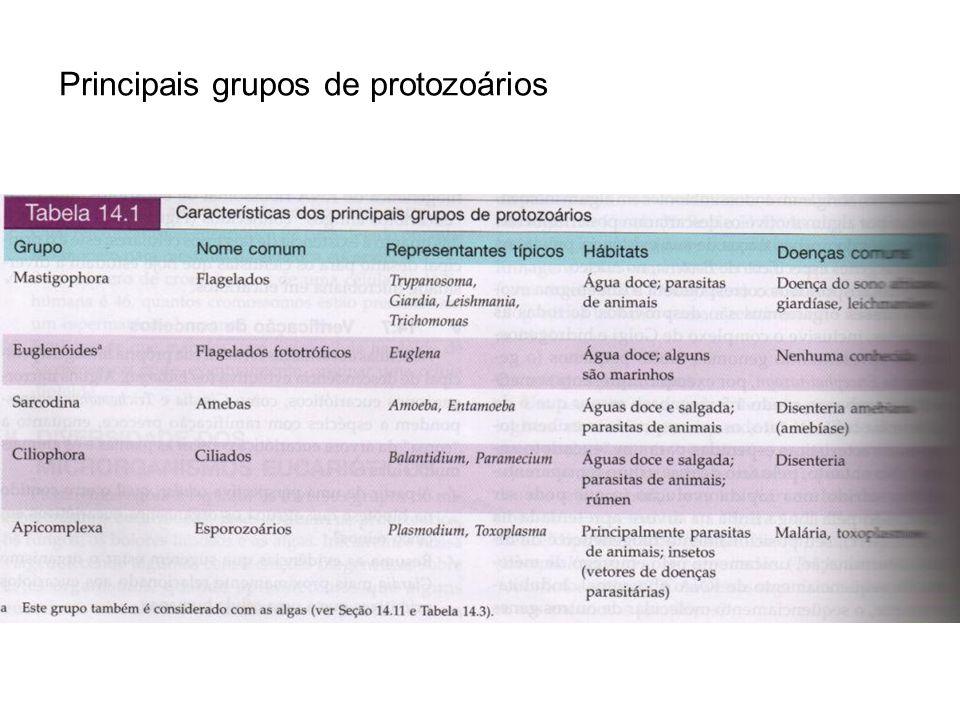 Principais grupos de protozoários