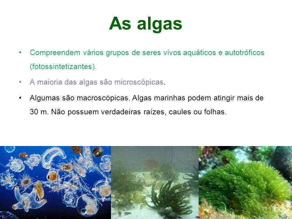 As algas Compreendem vários grupos de seres vivos aquáticos e autotróficos (fotossintetizantes). A maioria das algas são microscópicas. Algumas são ma