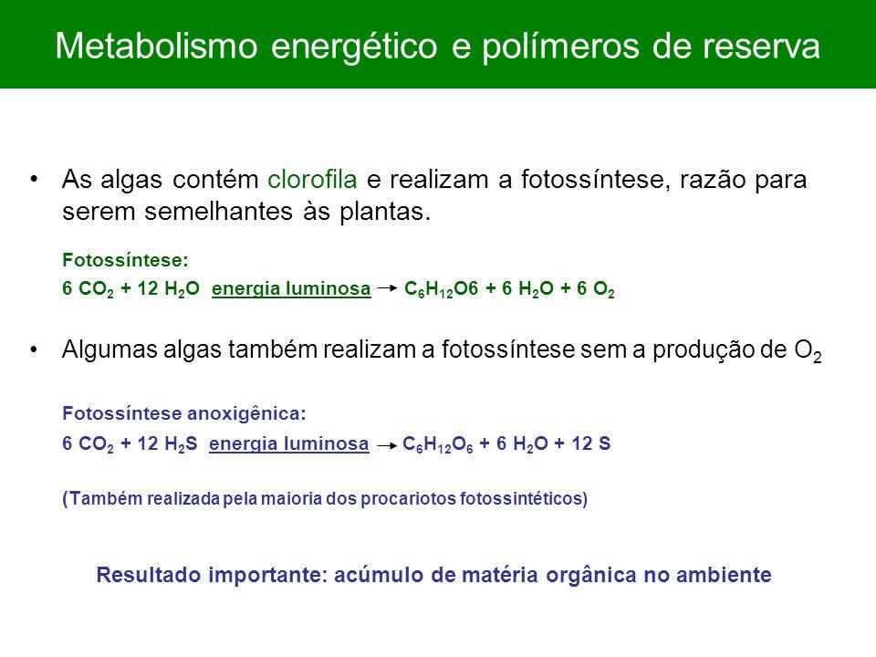 As algas contém clorofila e realizam a fotossíntese, razão para serem semelhantes às plantas. Fotossíntese: 6 CO 2 + 12 H 2 O energia luminosa C 6 H 1
