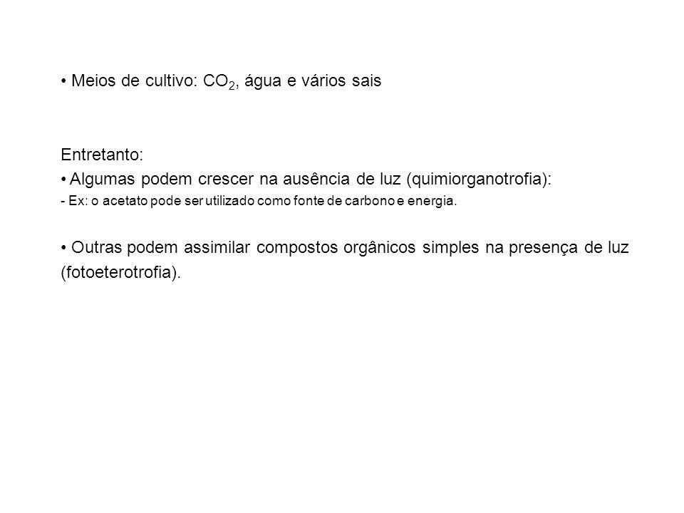 Meios de cultivo: CO 2, água e vários sais Entretanto: Algumas podem crescer na ausência de luz (quimiorganotrofia): - Ex: o acetato pode ser utilizad
