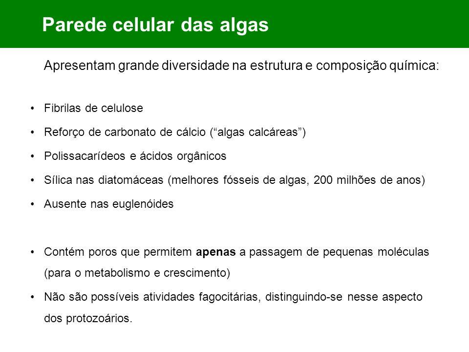 Parede celular das algas Apresentam grande diversidade na estrutura e composição química: Fibrilas de celulose Reforço de carbonato de cálcio (algas c