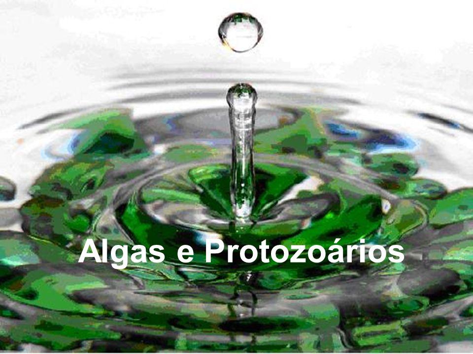 As algas contém clorofila coloração verde Outras algas comuns exibem coloração vermelha ou marrom devido à presença também de outros pigmentos, tais como a xantofila, mascarando a coloração verde.