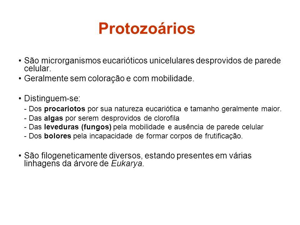 Protozoários São microrganismos eucarióticos unicelulares desprovidos de parede celular. Geralmente sem coloração e com mobilidade. Distinguem-se: - D
