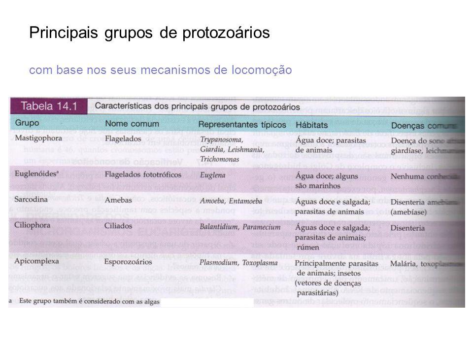 Principais grupos de protozoários com base nos seus mecanismos de locomoção