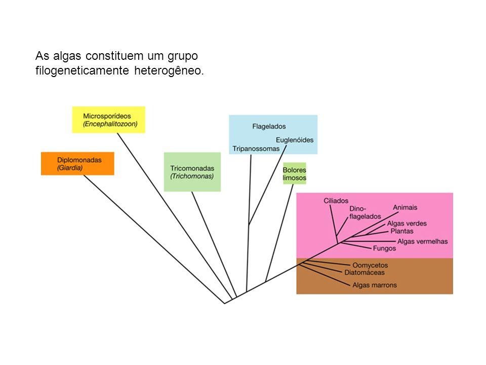 Os protozoários amebóides, ciliados e flagelados heterótrofos ingerem partículas ou outros organismos, participando do processo de reciclagem de substâncias do ambiente.