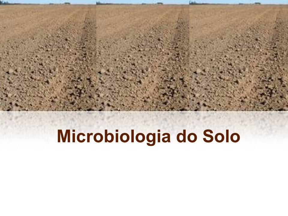Fungos: –5 x 10 3 - 9 x 10 5 por g de solo seco –limitados à superfície do solo –favorecidos em solos ácidos –ativos decompositores de tecidos vegetais –melhoram a estrutura física do solo Gêneros mais freqüentes: Penicillium, Mucor, Rhizopus, Fusarium, Aspergillus, Trichoderma A microbiota do solo