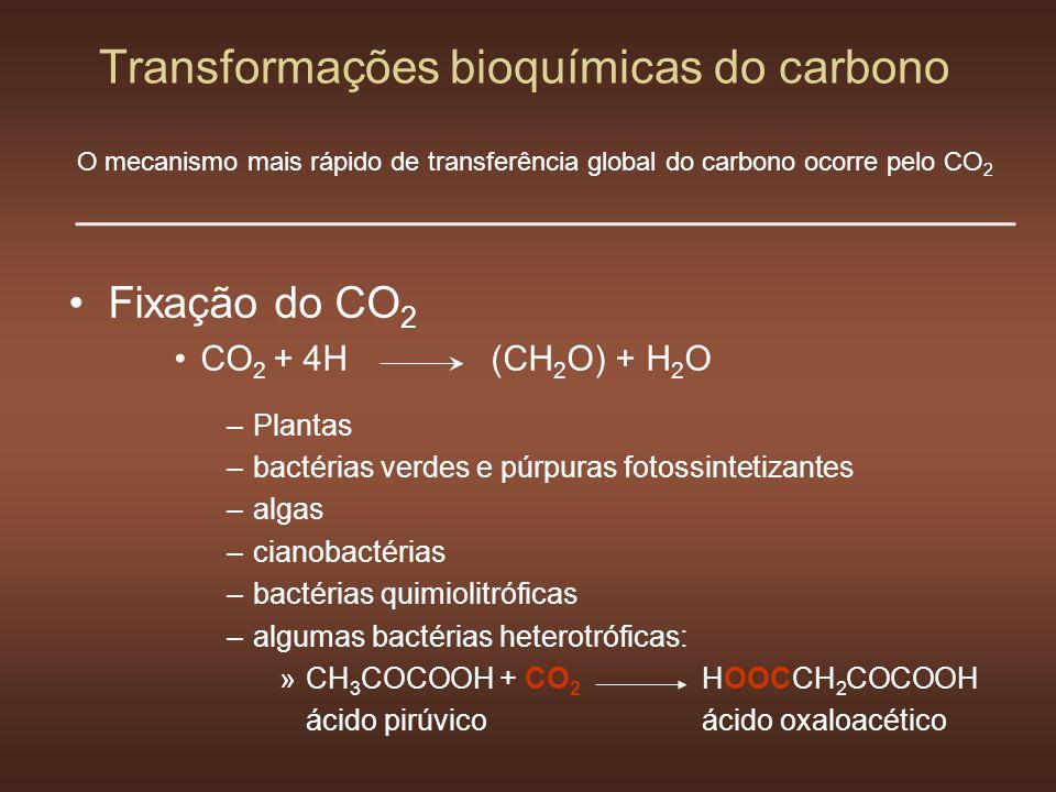 Transformações bioquímicas do carbono Fixação do CO 2 CO 2 + 4H(CH 2 O) + H 2 O –Plantas –bactérias verdes e púrpuras fotossintetizantes –algas –ciano