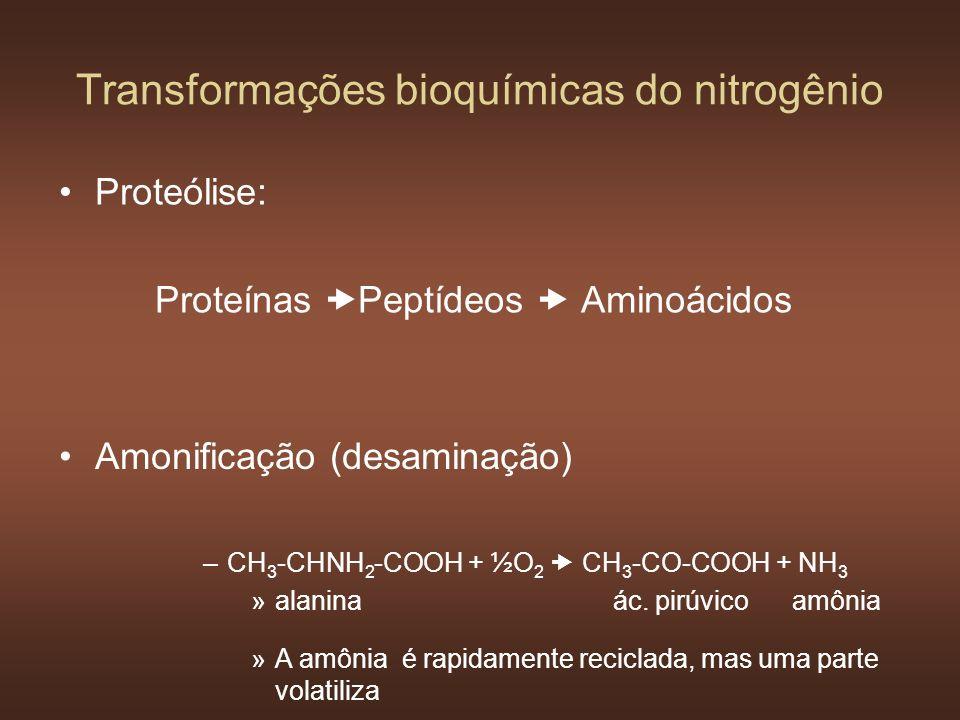 Proteólise: Proteínas Peptídeos Aminoácidos Transformações bioquímicas do nitrogênio Amonificação (desaminação) –CH 3 -CHNH 2 -COOH + ½O 2 CH 3 -CO-CO