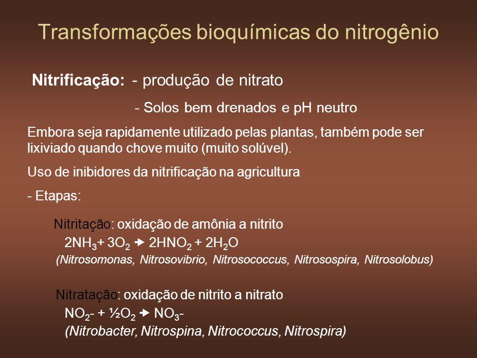 Transformações bioquímicas do nitrogênio Nitrificação: - produção de nitrato - Solos bem drenados e pH neutro Embora seja rapidamente utilizado pelas