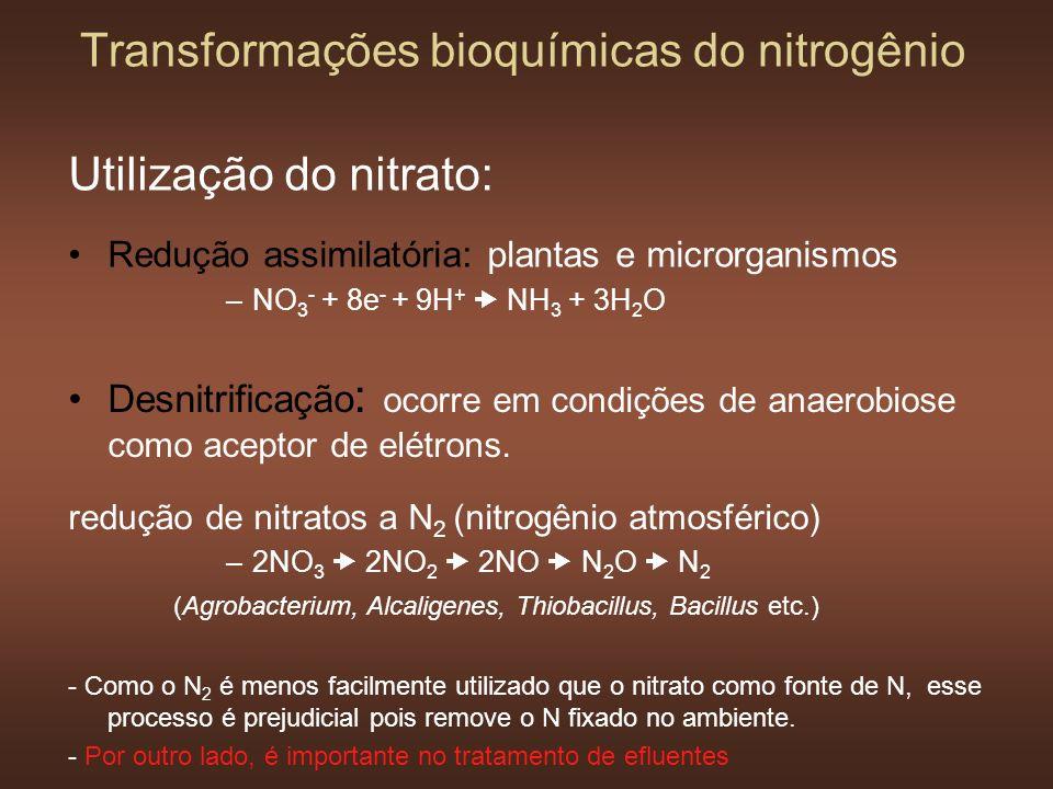 Utilização do nitrato: Redução assimilatória: plantas e microrganismos –NO 3 - + 8e - + 9H + NH 3 + 3H 2 O Transformações bioquímicas do nitrogênio De