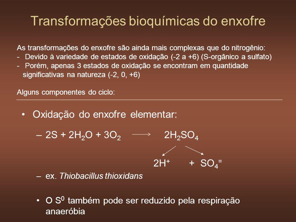 Transformações bioquímicas do enxofre Oxidação do enxofre elementar: –2S + 2H 2 O + 3O 2 2H 2 SO 4 2H + + SO 4 = –ex. Thiobacillus thioxidans O S 0 ta