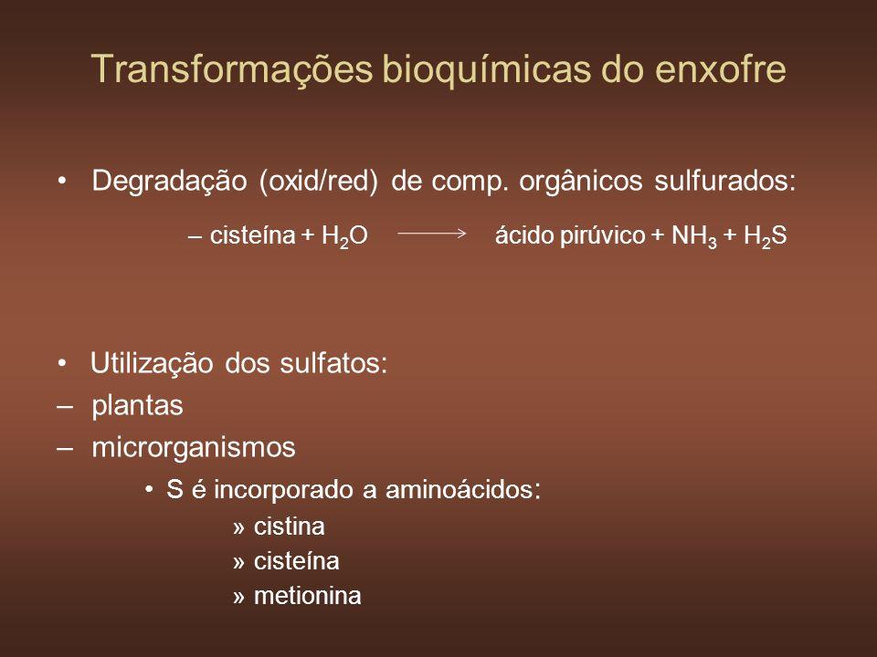 Transformações bioquímicas do enxofre Degradação (oxid/red) de comp. orgânicos sulfurados: –cisteína + H 2 Oácido pirúvico + NH 3 + H 2 S Utilização d