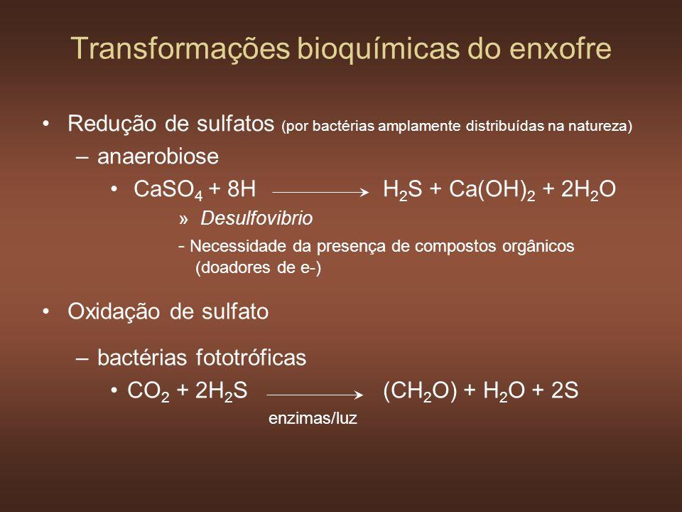 Transformações bioquímicas do enxofre Redução de sulfatos (por bactérias amplamente distribuídas na natureza) –anaerobiose CaSO 4 + 8HH 2 S + Ca(OH) 2