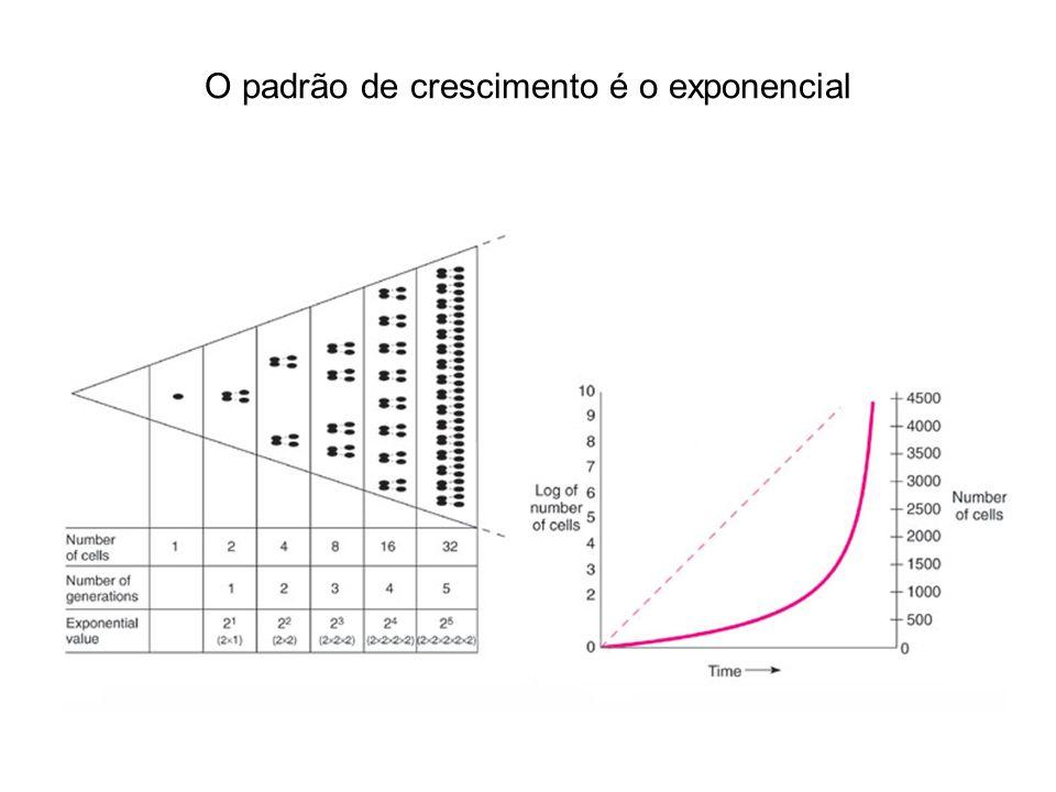 O padrão de crescimento é o exponencial
