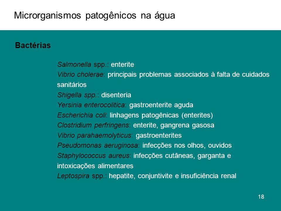 Microrganismos patogênicos na água Bactérias Salmonella spp.: enterite Vibrio cholerae: principais problemas associados à falta de cuidados sanitários Shigella spp.: disenteria Yersinia enterocolitica: gastroenterite aguda Escherichia coli: linhagens patogênicas (enterites) Clostridium perfringens: enterite, gangrena gasosa Vibrio parahaemolyticus: gastroenterites Pseudomonas aeruginosa: infecções nos olhos, ouvidos Staphylococcus aureus: infecções cutâneas, garganta e intoxicações alimentares Leptospira spp.: hepatite, conjuntivite e insuficiência renal 18