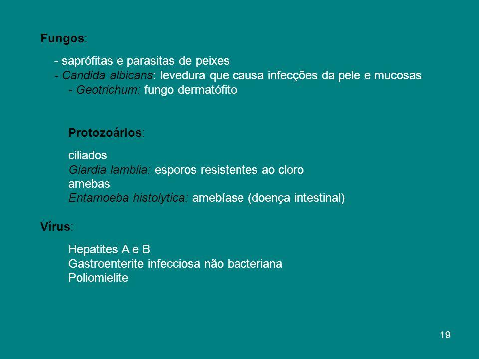Fungos: - saprófitas e parasitas de peixes - Candida albicans: levedura que causa infecções da pele e mucosas - Geotrichum: fungo dermatófito Protozoários: ciliados Giardia lamblia: esporos resistentes ao cloro amebas Entamoeba histolytica: amebíase (doença intestinal) Vírus: Hepatites A e B Gastroenterite infecciosa não bacteriana Poliomielite 19