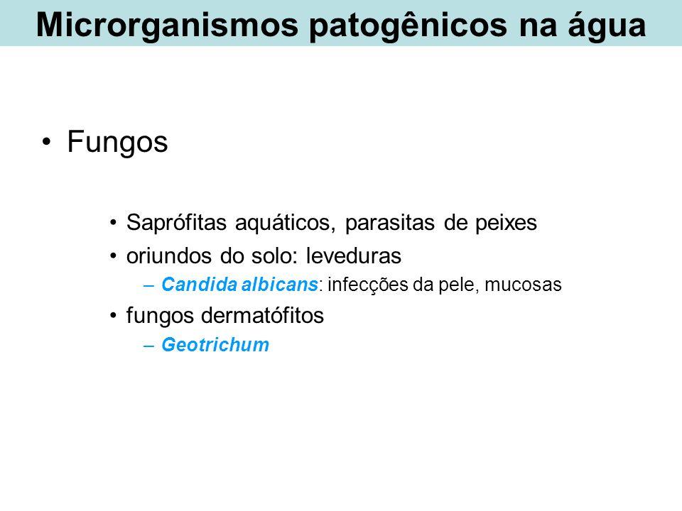 Fungos Saprófitas aquáticos, parasitas de peixes oriundos do solo: leveduras –Candida albicans: infecções da pele, mucosas fungos dermatófitos –Geotri