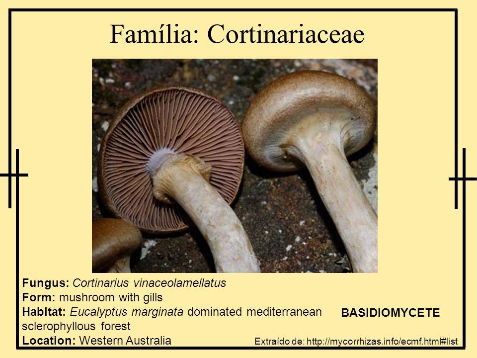 Família: Cortinariaceae Fungus: Cortinarius vinaceolamellatus Form: mushroom with gills Habitat: Eucalyptus marginata dominated mediterranean scleroph