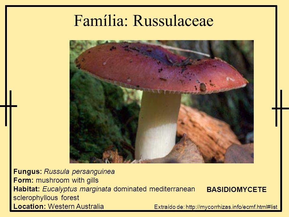 Família: Russulaceae Fungus: Russula persanguinea Form: mushroom with gills Habitat: Eucalyptus marginata dominated mediterranean sclerophyllous fores