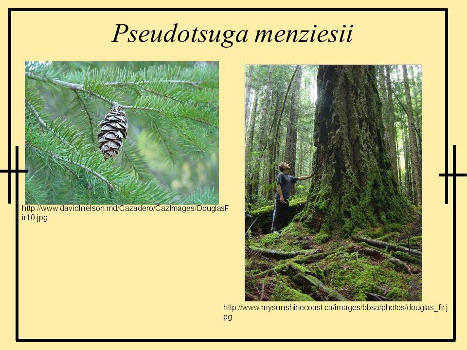 Pseudotsuga menziesii http://www.davidlnelson.md/Cazadero/CazImages/DouglasF ir10.jpg http://www.mysunshinecoast.ca/images/bbsa/photos/douglas_fir.j p