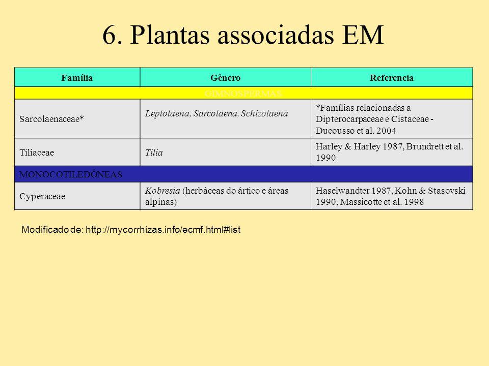 6. Plantas associadas EM FamíliaGêneroReferencia GIMNOSPERMAS Sarcolaenaceae* Leptolaena, Sarcolaena, Schizolaena *Famílias relacionadas a Dipterocarp