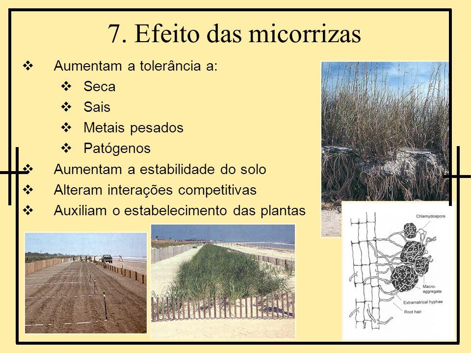7. Efeito das micorrizas Aumentam a tolerância a: Seca Sais Metais pesados Patógenos Aumentam a estabilidade do solo Alteram interações competitivas A