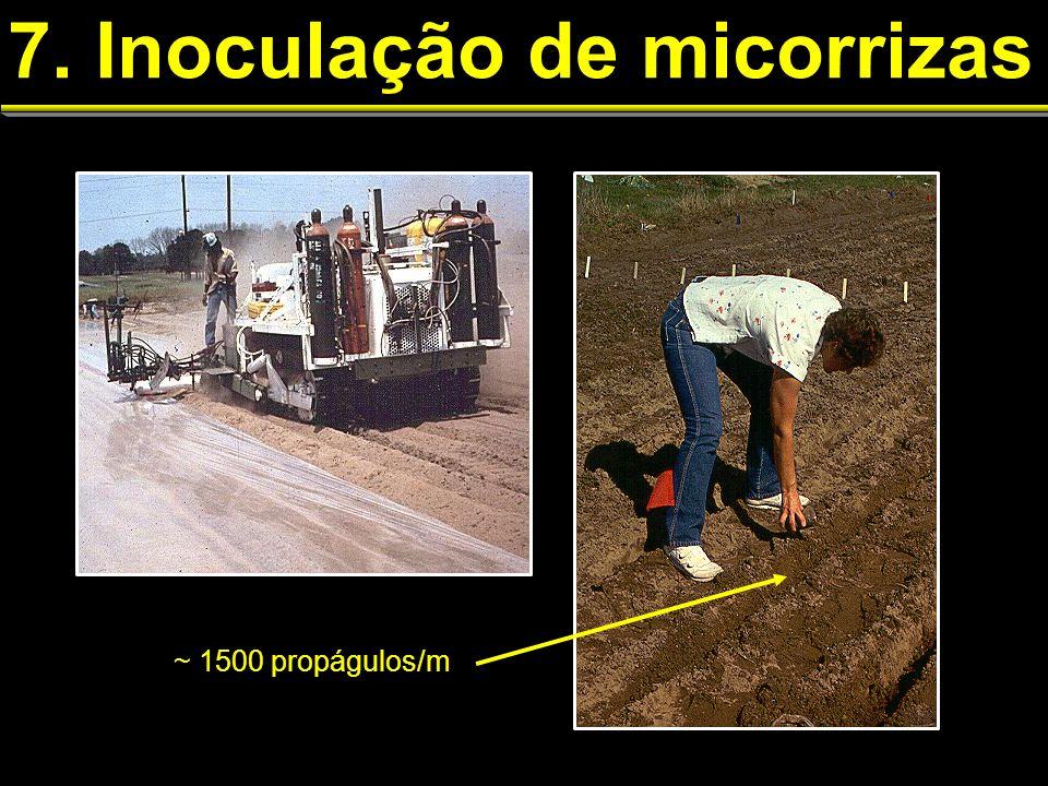 7. Inoculação de micorrizas ~ 1500 propágulos/m