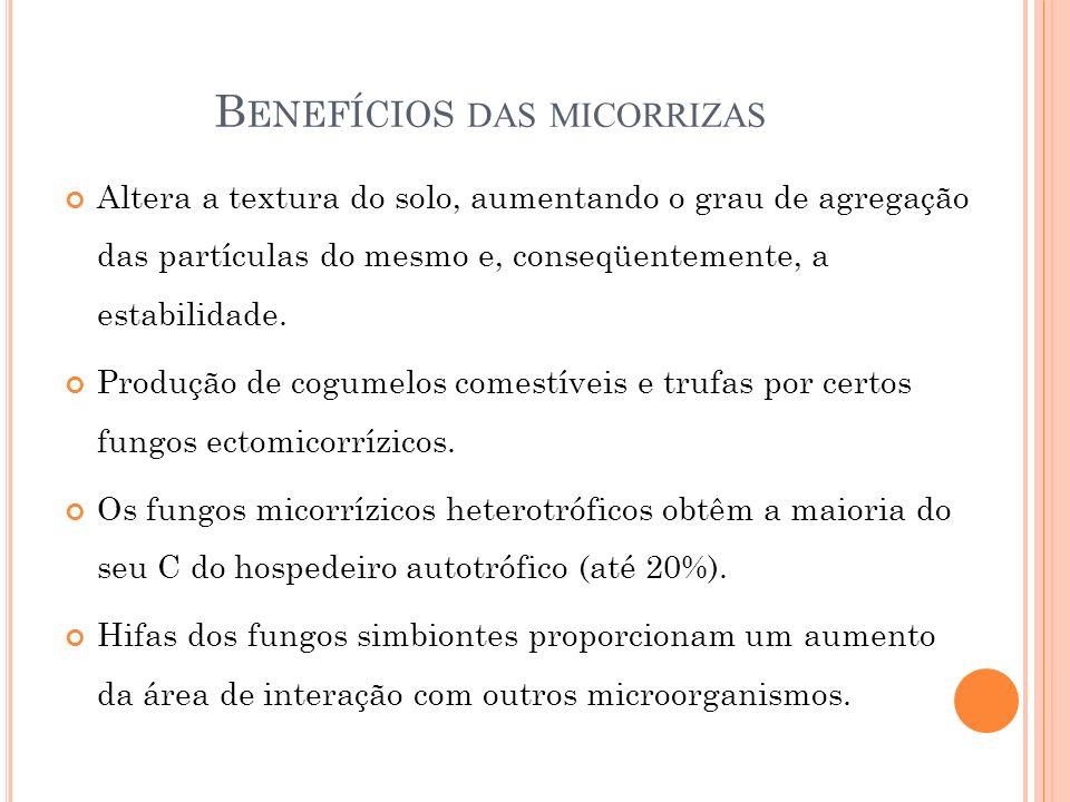 B ENEFÍCIOS DAS MICORRIZAS Altera a textura do solo, aumentando o grau de agregação das partículas do mesmo e, conseqüentemente, a estabilidade. Produ