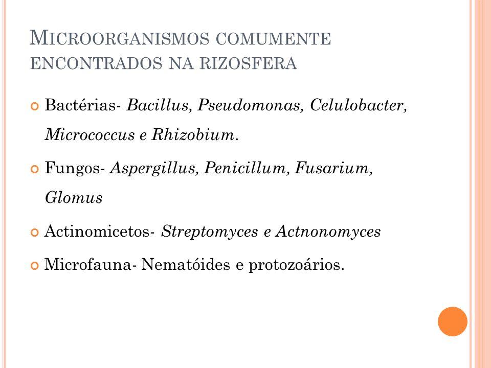 M ICROORGANISMOS COMUMENTE ENCONTRADOS NA RIZOSFERA Bactérias- Bacillus, Pseudomonas, Celulobacter, Micrococcus e Rhizobium. Fungos- Aspergillus, Peni