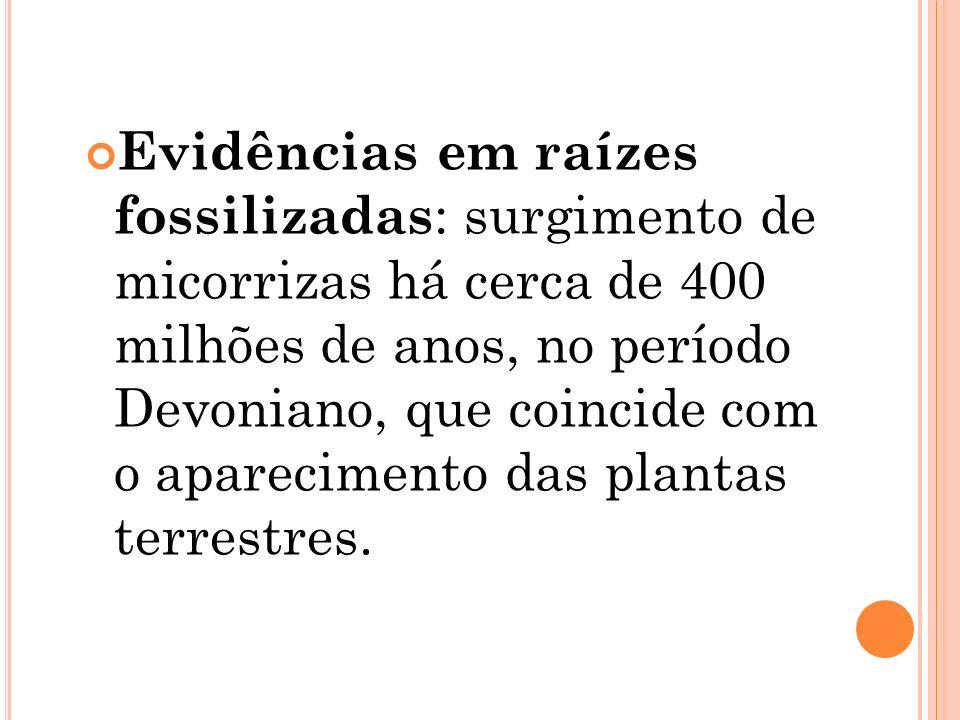 Evidências em raízes fossilizadas : surgimento de micorrizas há cerca de 400 milhões de anos, no período Devoniano, que coincide com o aparecimento da
