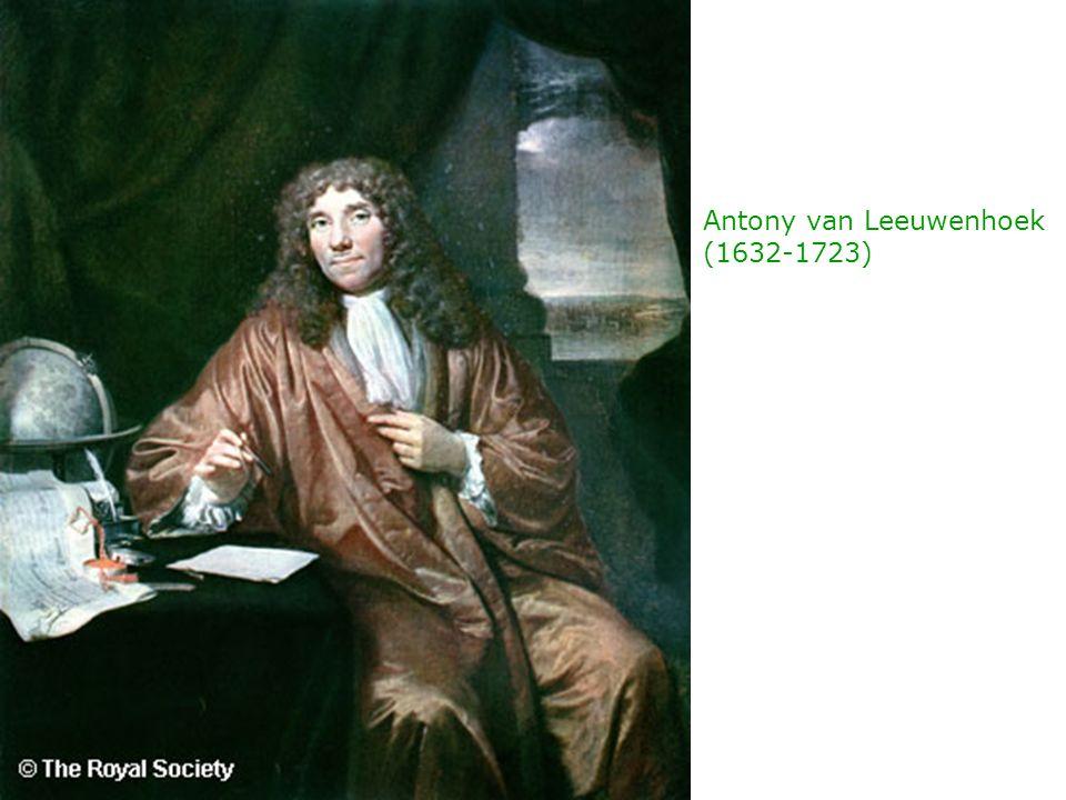 Antony van Leeuwenhoek (1632-1723)