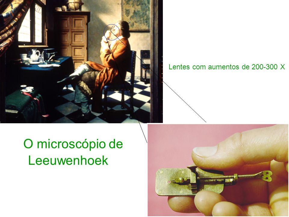 O microscópio de Leeuwenhoek Lentes com aumentos de 200-300 X
