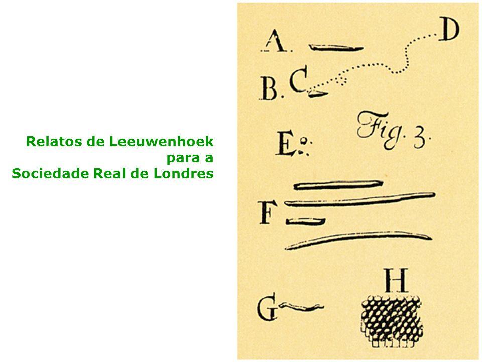 Relatos de Leeuwenhoek para a Sociedade Real de Londres