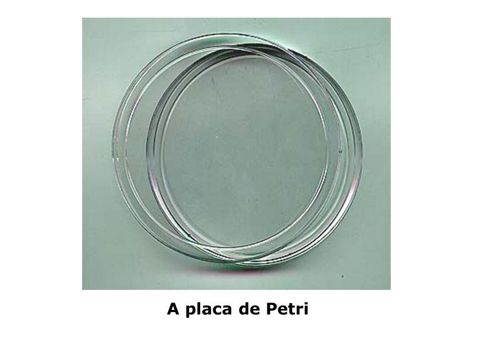 A placa de Petri