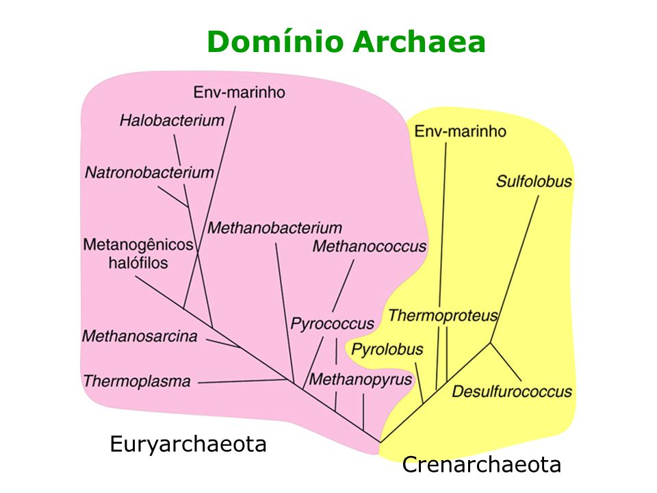 Domínio Archaea Euryarchaeota Crenarchaeota