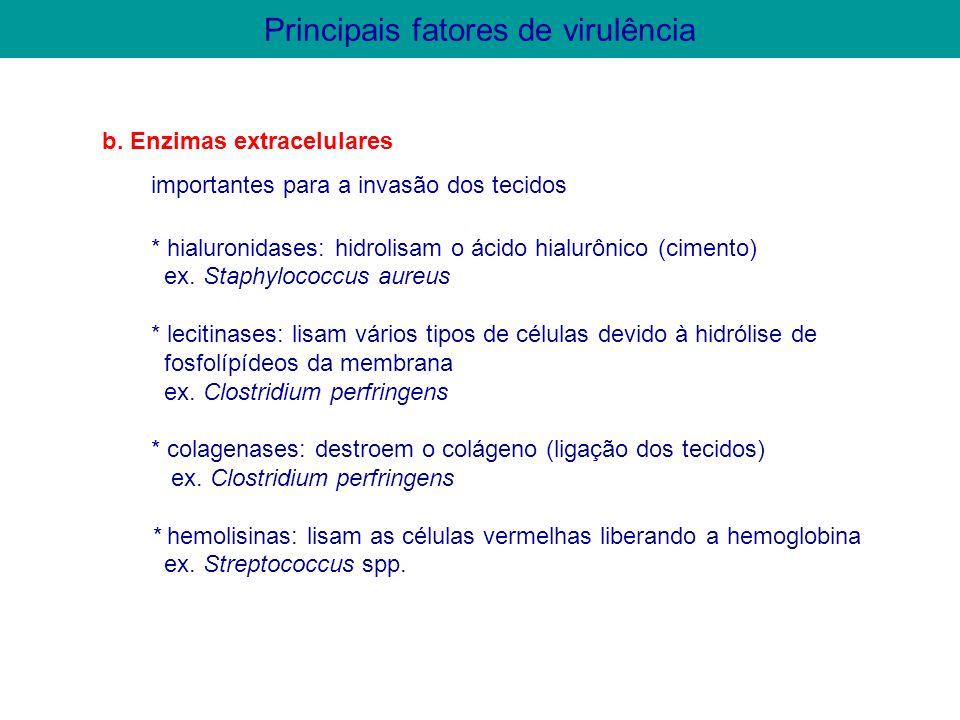b. Enzimas extracelulares importantes para a invasão dos tecidos * hialuronidases: hidrolisam o ácido hialurônico (cimento) ex. Staphylococcus aureus