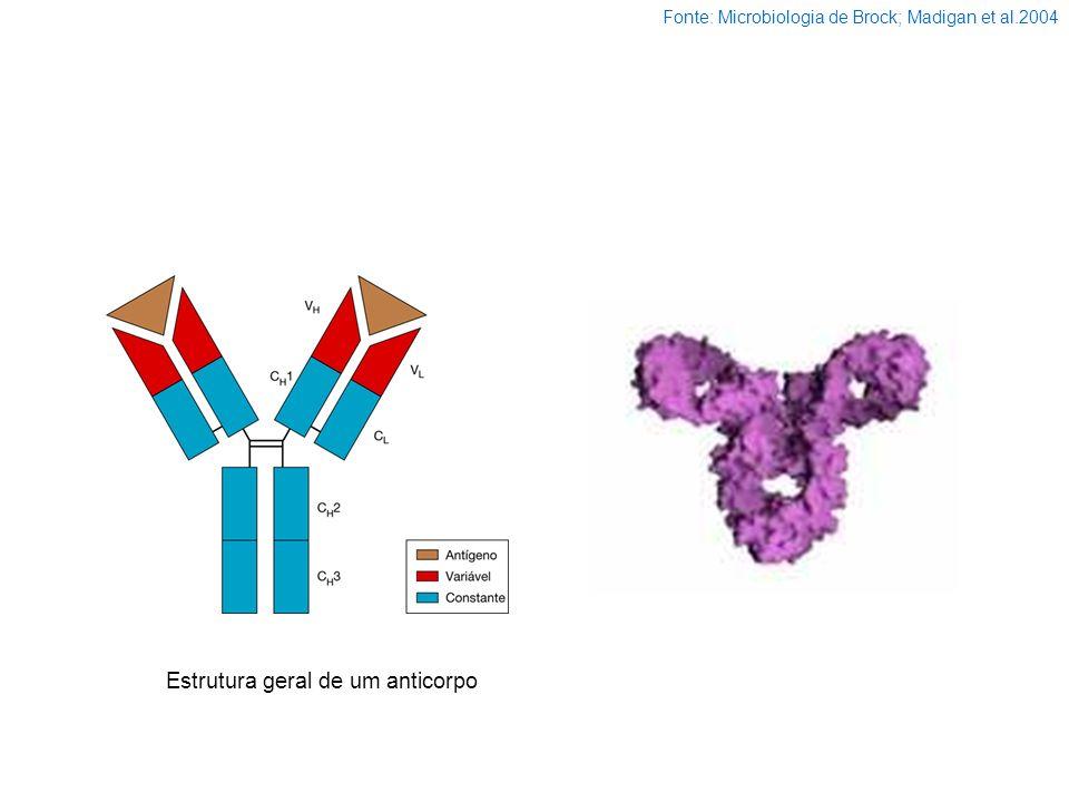 Estrutura geral de um anticorpo Fonte: Microbiologia de Brock; Madigan et al.2004