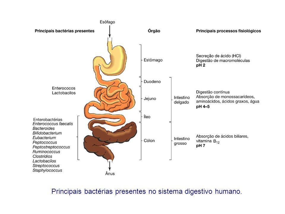 Interações microbianas com as membranas mucosas: (a) associação frouxa; (b) adesão; (c) invasão Fonte: Microbiologia de Brock; Madigan et al., 2004 Comensais parasitas
