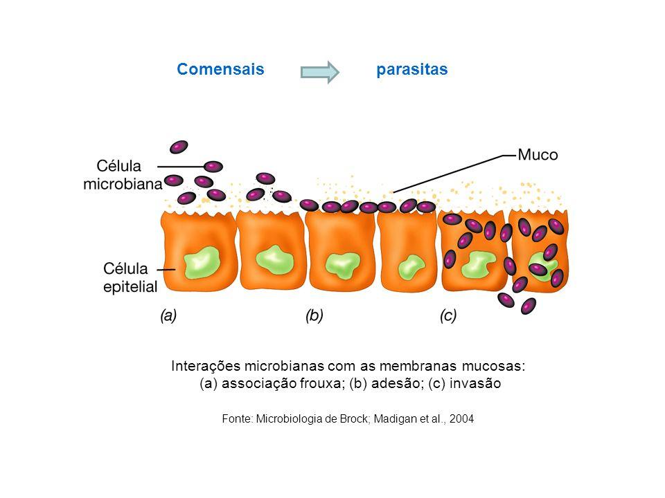 Interações microbianas com as membranas mucosas: (a) associação frouxa; (b) adesão; (c) invasão Fonte: Microbiologia de Brock; Madigan et al., 2004 Co