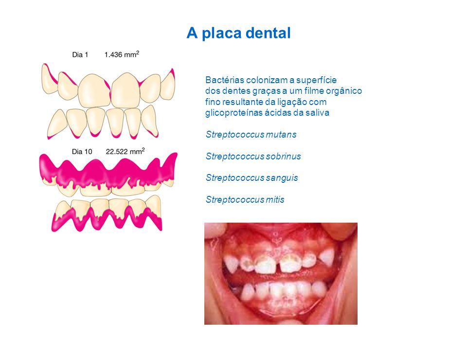 A placa dental Bactérias colonizam a superfície dos dentes graças a um filme orgânico fino resultante da ligação com glicoproteínas ácidas da saliva S