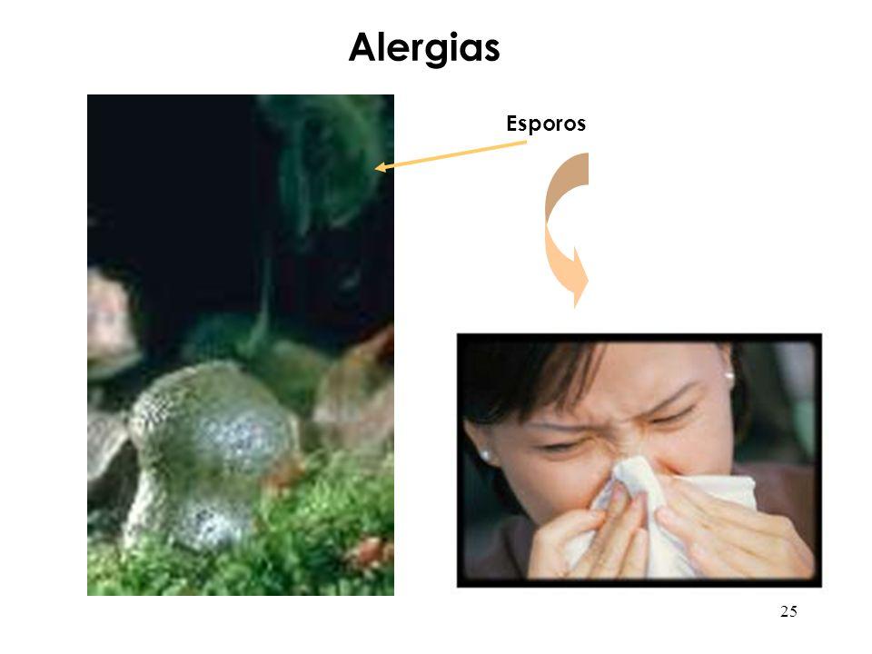 Alergias Esporos 25