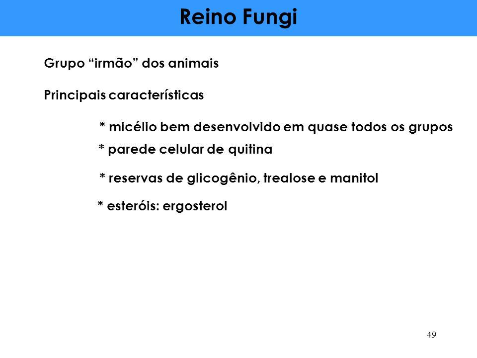 Reino Fungi Grupo irmão dos animais Principais características * parede celular de quitina * micélio bem desenvolvido em quase todos os grupos * reservas de glicogênio, trealose e manitol * esteróis: ergosterol 49