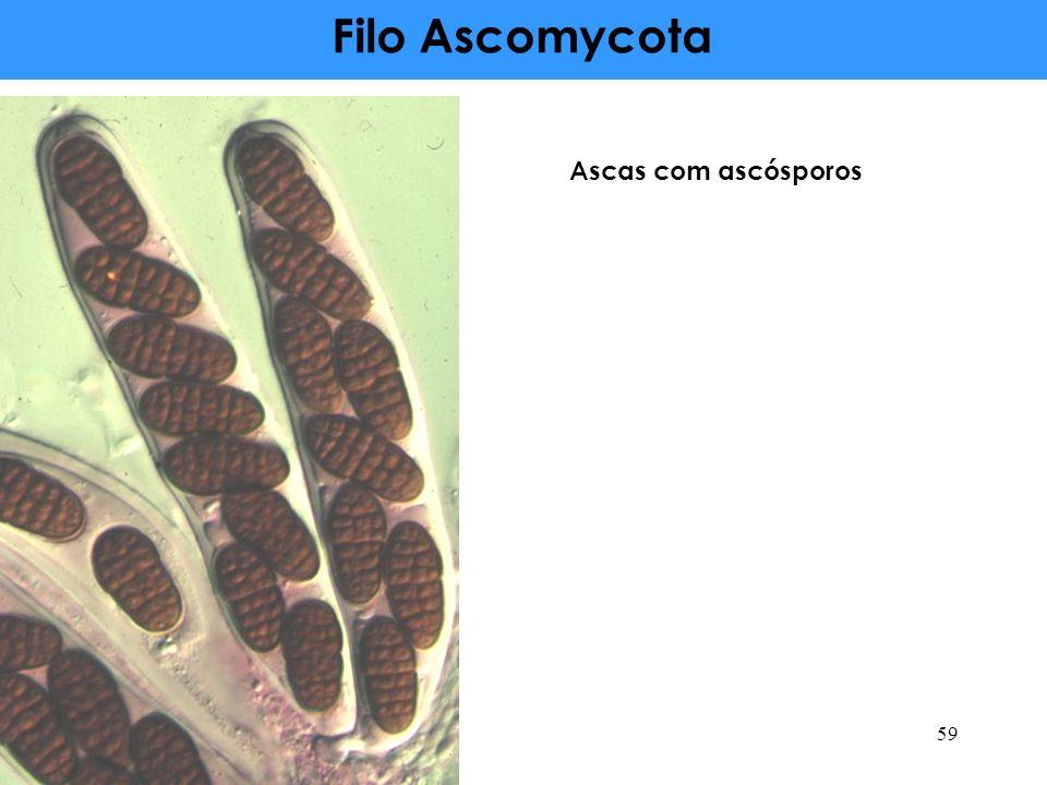 Filo Ascomycota Ascas com ascósporos 59