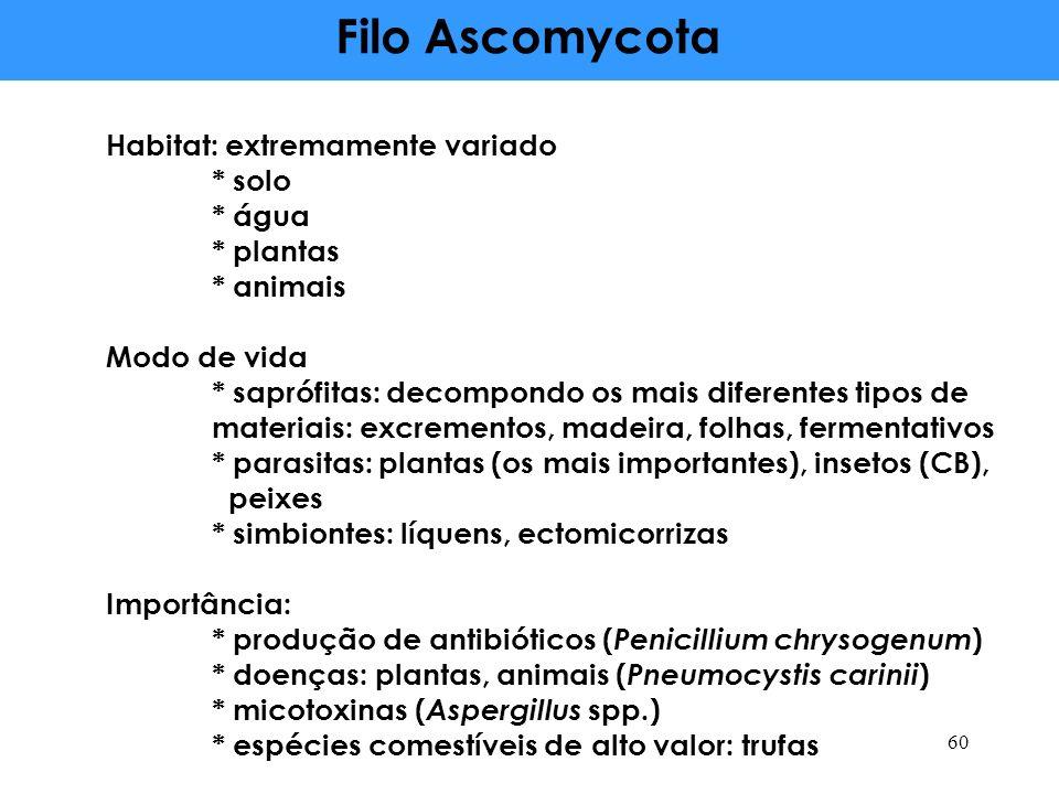 Filo Ascomycota Habitat: extremamente variado * solo * água * plantas * animais Modo de vida * saprófitas: decompondo os mais diferentes tipos de materiais: excrementos, madeira, folhas, fermentativos * parasitas: plantas (os mais importantes), insetos (CB), peixes * simbiontes: líquens, ectomicorrizas Importância: * produção de antibióticos ( Penicillium chrysogenum ) * doenças: plantas, animais ( Pneumocystis carinii ) * micotoxinas ( Aspergillus spp.) * espécies comestíveis de alto valor: trufas 60